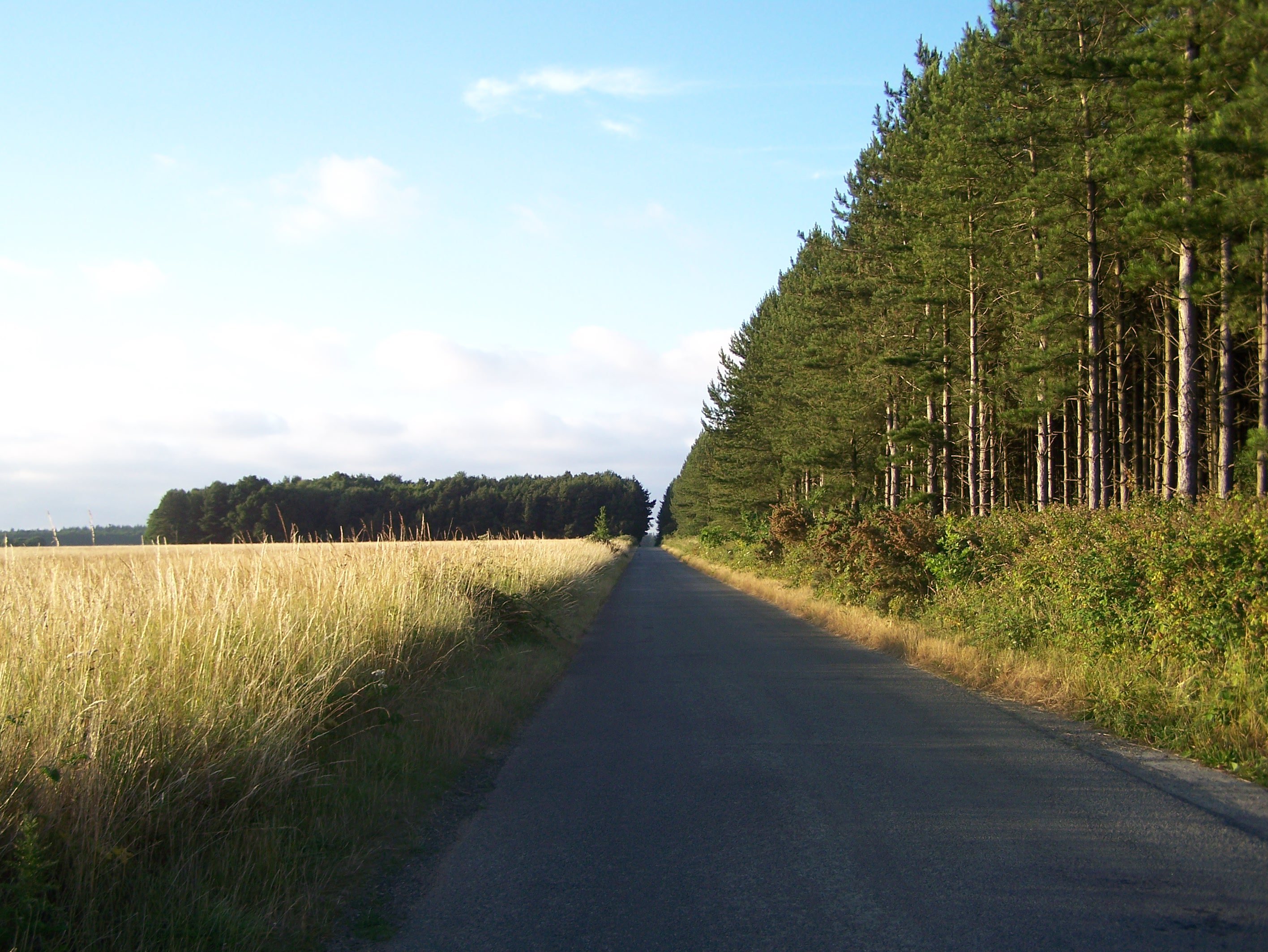 East side of perimeter track, today a minor road 15:07:2006.JPG